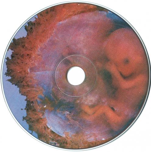 Линда - Плацента (1999)