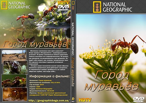 National Geographic: Город муравьёв / National Geographic: City of Ants (2010)