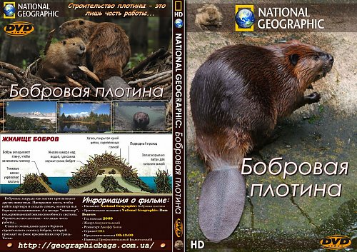 National Geographic: Бобровая плотина / Dam Beavers (2009)