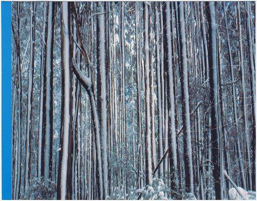 Ornament - Bleu (2004)